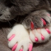 Ноготки для кошек
